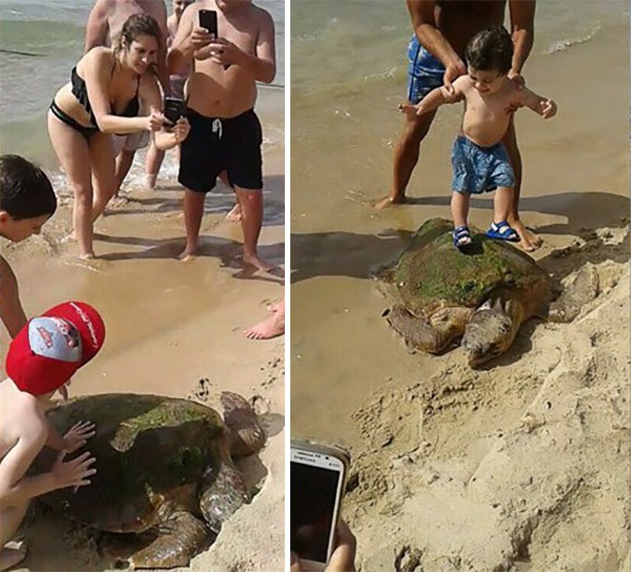 marine-turtle-dragged-sea-kid-selfie-lebanon-11