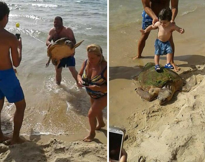 This Turtle Was Dragged From The Sea For Selfies Until These People Rescued Him