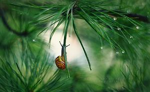 I Capture The Tiny World Of Snails In Poland