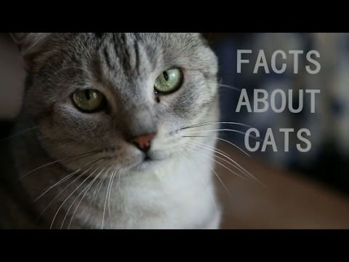 Cutest Fact About Cats
