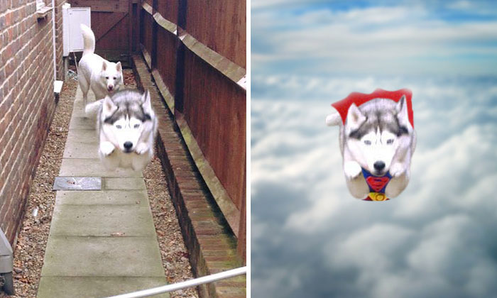 Photoshop This Flying Husky