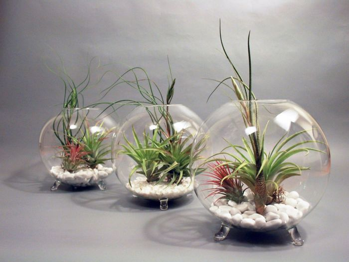 Decorating With Alien Plants