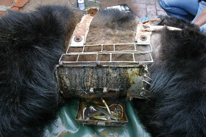 rescue-bear-torture-vest-caesar-bile-farm-china-4