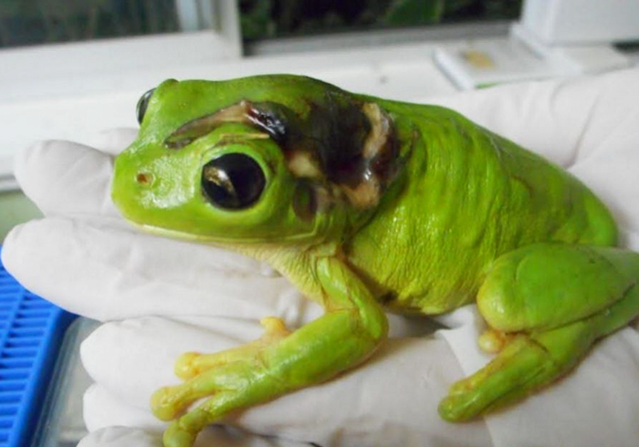 rescue-frog-surgery-lawnmower-green-tree-3