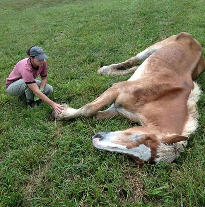 rescue-horse-senior-max-arthur-ferrell-hollow-farm-sanctuary-12