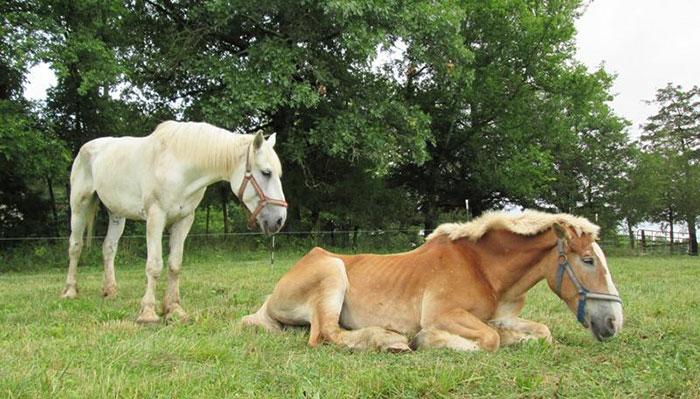 rescue-horse-senior-max-arthur-ferrell-hollow-farm-sanctuary-13
