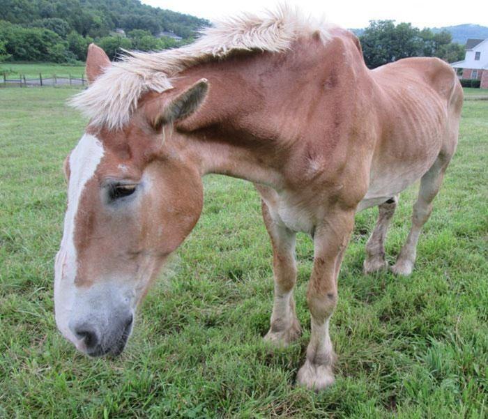 rescue-horse-senior-max-arthur-ferrell-hollow-farm-sanctuary-2