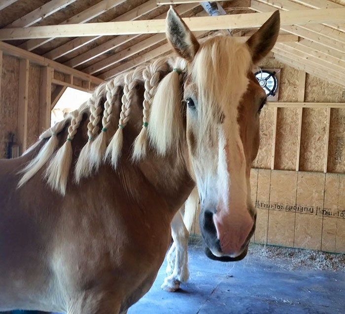 rescue-horse-senior-max-arthur-ferrell-hollow-farm-sanctuary-3