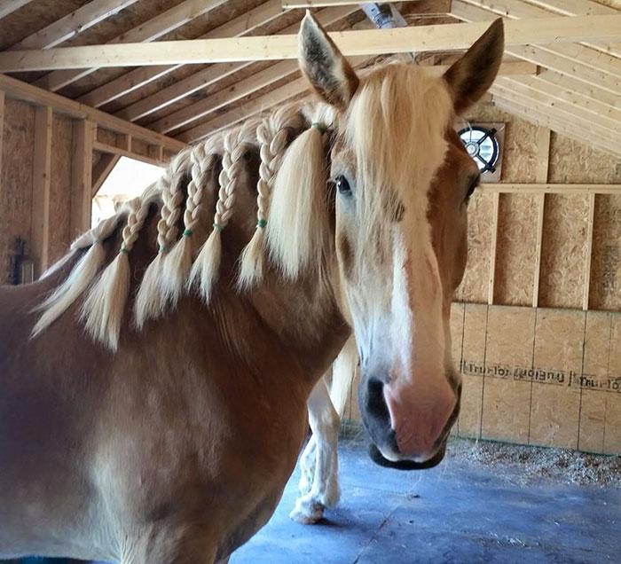 rescue-horse-senior-max-arthur-ferrell-hollow-farm-sanctuary-3