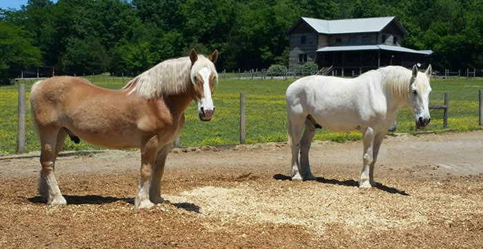 rescue-horse-senior-max-arthur-ferrell-hollow-farm-sanctuary-31