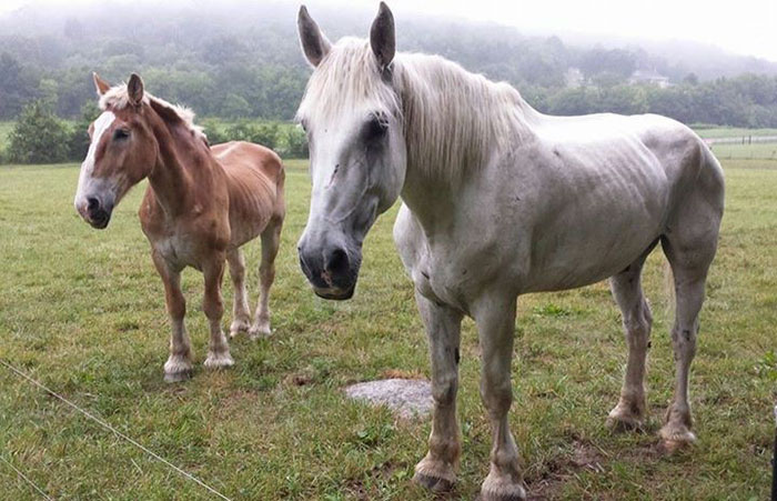 rescue-horse-senior-max-arthur-ferrell-hollow-farm-sanctuary-7