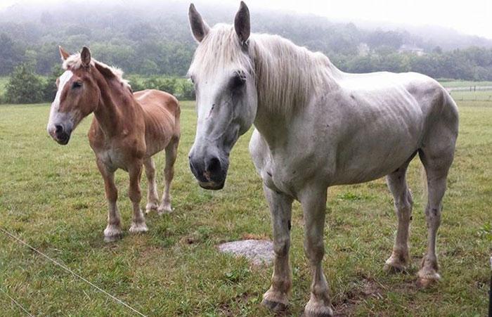 rescue-horse-senior-max-arthur-ferrell-hollow-farm-sanctuary-7