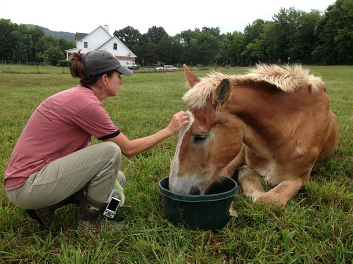 rescue-horse-senior-max-arthur-ferrell-hollow-farm-sanctuary-9