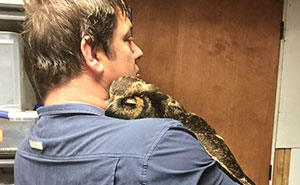 Owl Recognizes The Man Who Saved Her, Gives Him The Most Heartfelt Hug