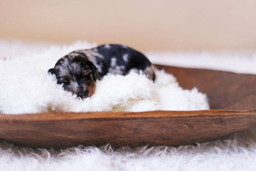 Best Tiny Dogs