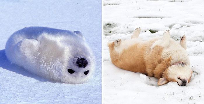 Seals Are Actually Ocean Puppies (15+ Pics)