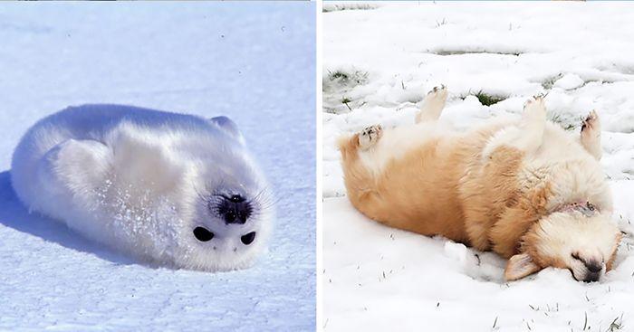 Seals Are Actually Ocean Puppies 40 Pics Bored Panda