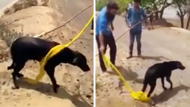 sikh-man-removes-turban-save-drowning-dog-2
