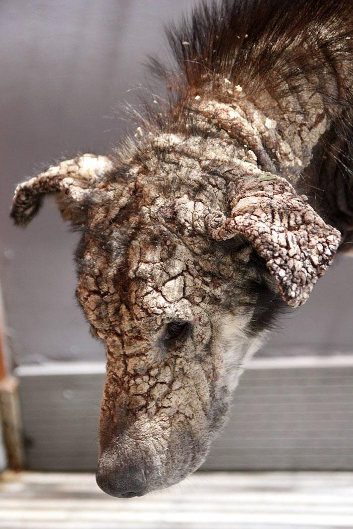 stray-dog-transform-stone-mange-petra-greece-14
