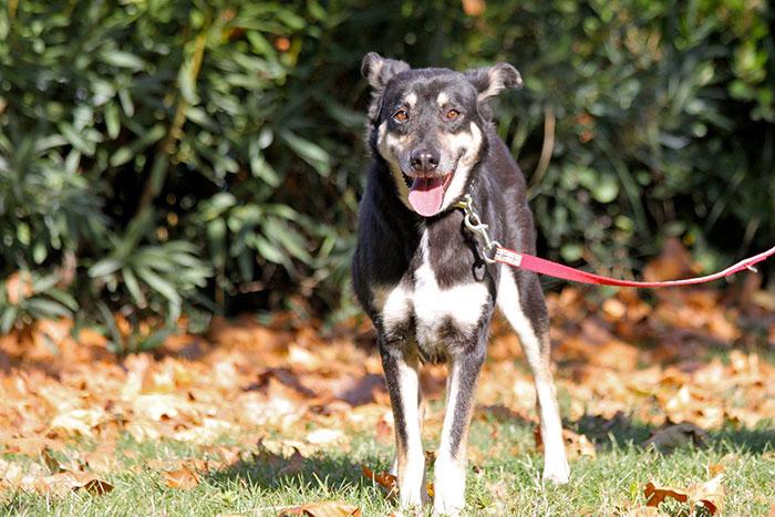 stray-dog-transform-stone-mange-petra-greece-16