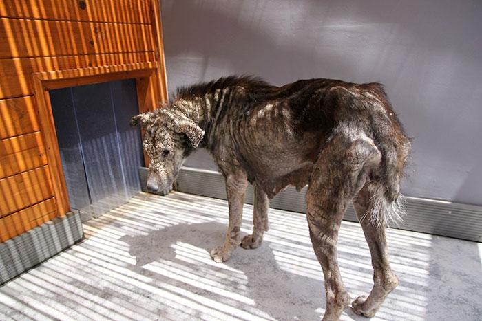 stray-dog-transform-stone-mange-petra-greece-4