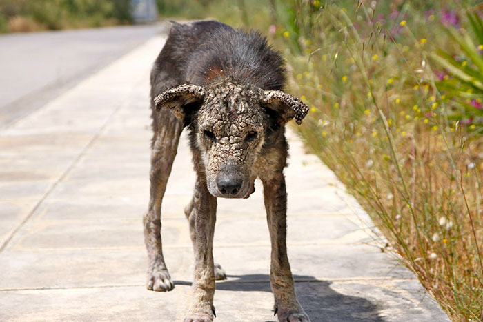 stray-dog-transform-stone-mange-petra-greece-7