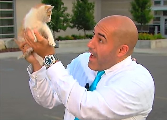 Stray Kitten Interrupts Live Newscast And Gets Rescued