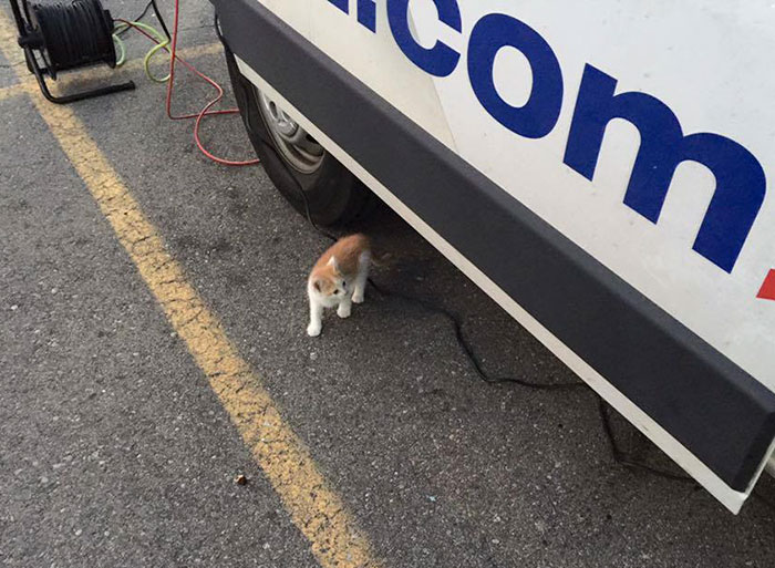 stray-kitten-interrupts-reporter-live-shot-lucky-4
