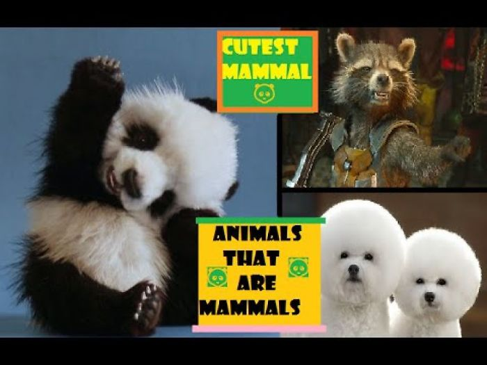 Animals That Are Mammals | Funny Baby Mammals