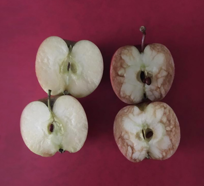 This Teacher Used Apples To Explain The Horrible Truth About Bullying