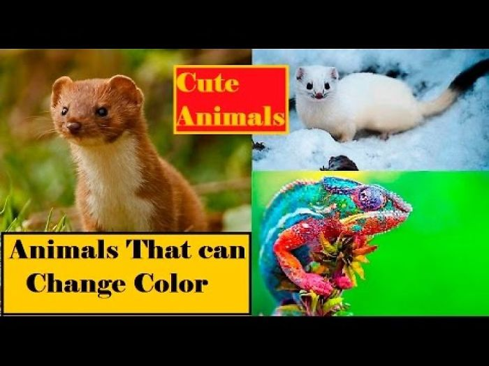 Animals That Change Color | How Do Animals Change Color