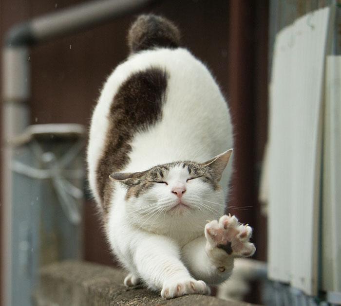 Tokyo's Stray Cats