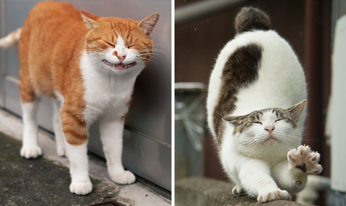 Japanese Photographer Documents The Many Faces of Tokyo's Stray Cats (47 Pics)