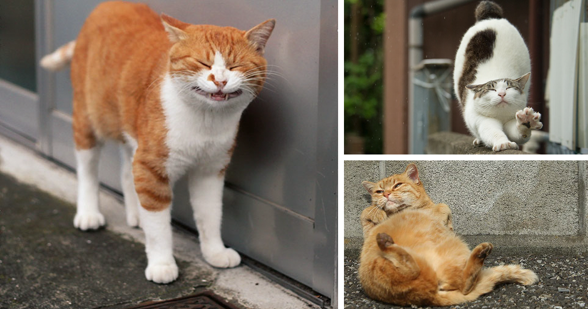 Japanese Photographer Documents The Many Faces of Tokyo's Stray Cats (10+ Pics)
