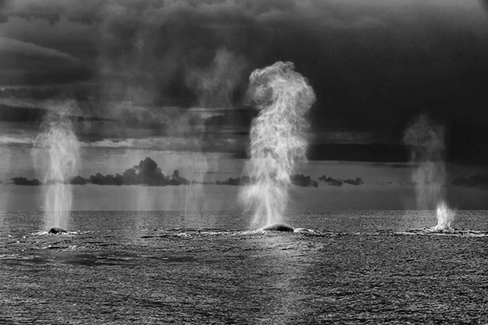 whales-dolphins-sea-animal-photography-marine-life-christopher-swann-1