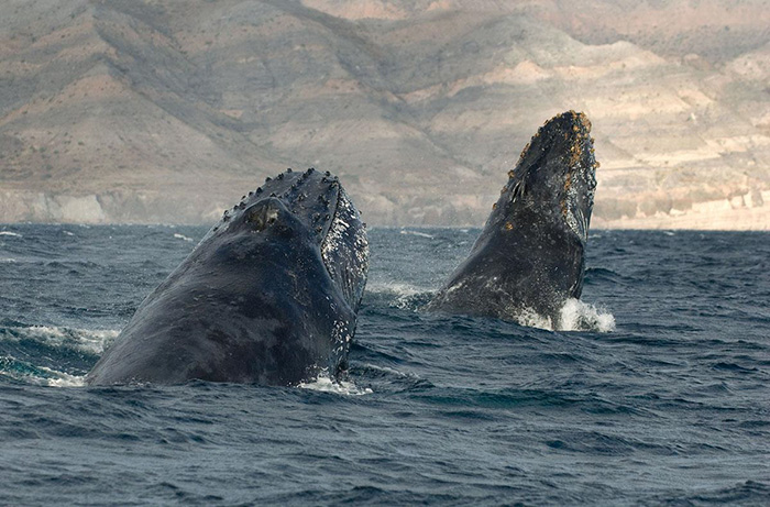 whales-dolphins-sea-animal-photography-marine-life-christopher-swann-15