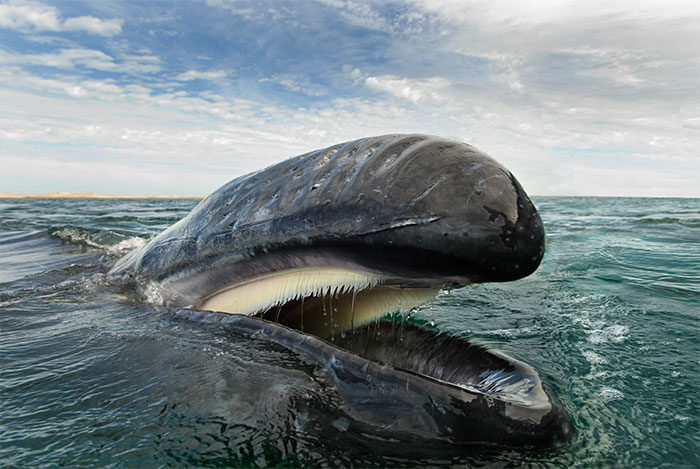 Photographer Spends 25 Years Trying To Document The Majestic Beauty Of Whales And Dolphins