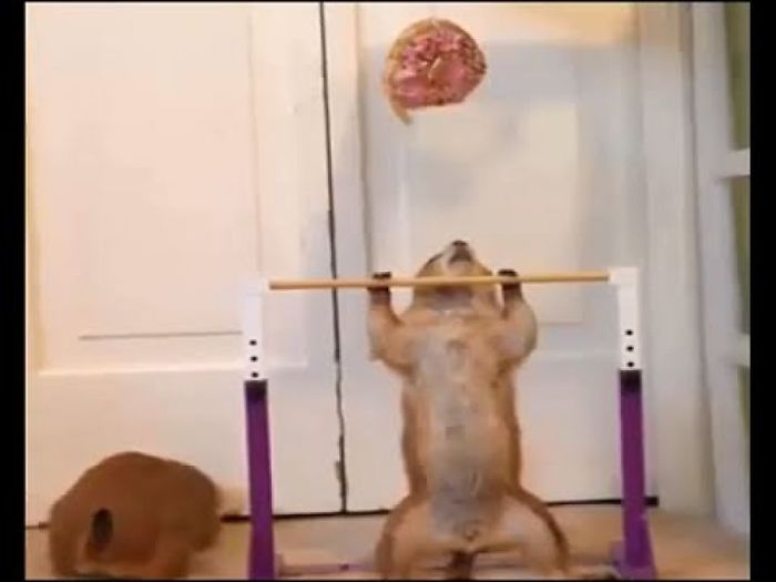 Funny Animals – Chipmunks In Real Life – Just 2 Squirrel Do Fitness