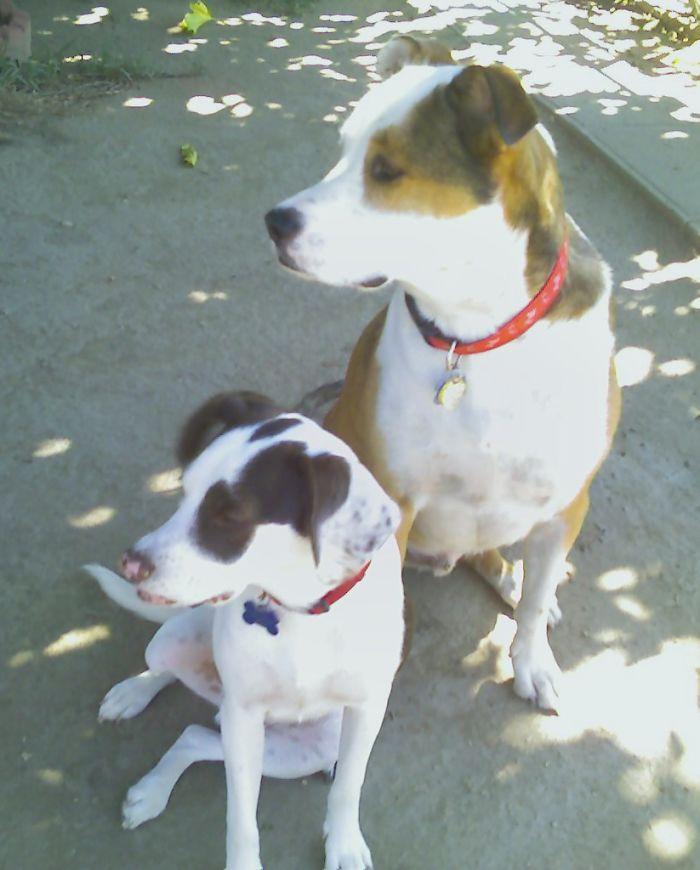 My Dogs, Reno & Austin.