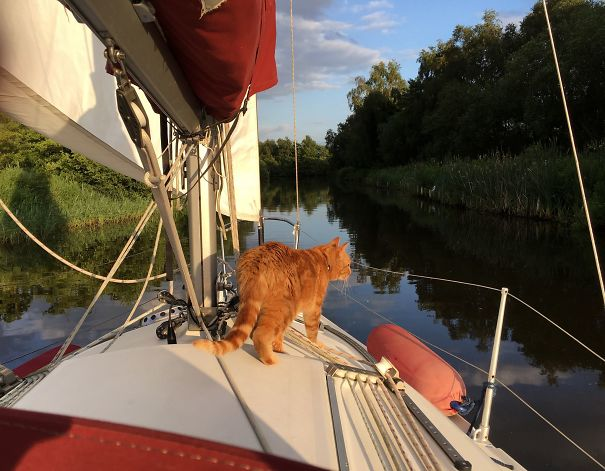 Ship's Cat Should Keep Mice Off - He Brings Them Back !