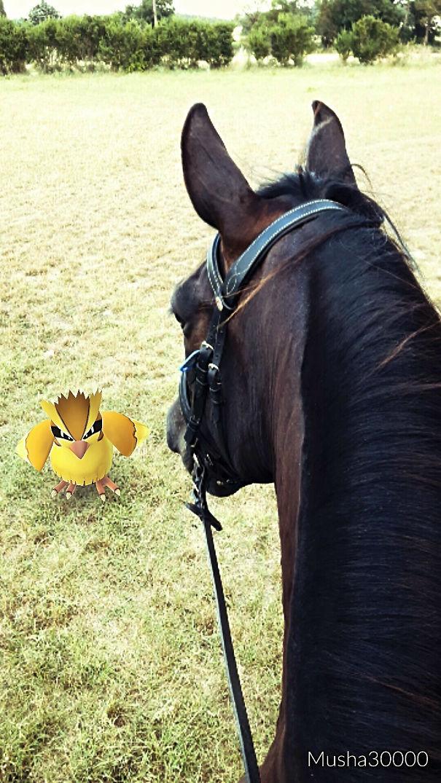 Pokemon Hunting On Horse