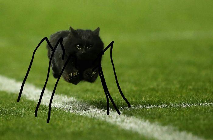 Spider Cat, Spider Cat.