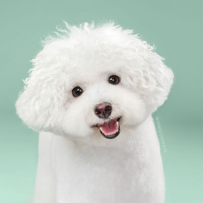 Dogs Before And After Their Haircuts (16 Pics)