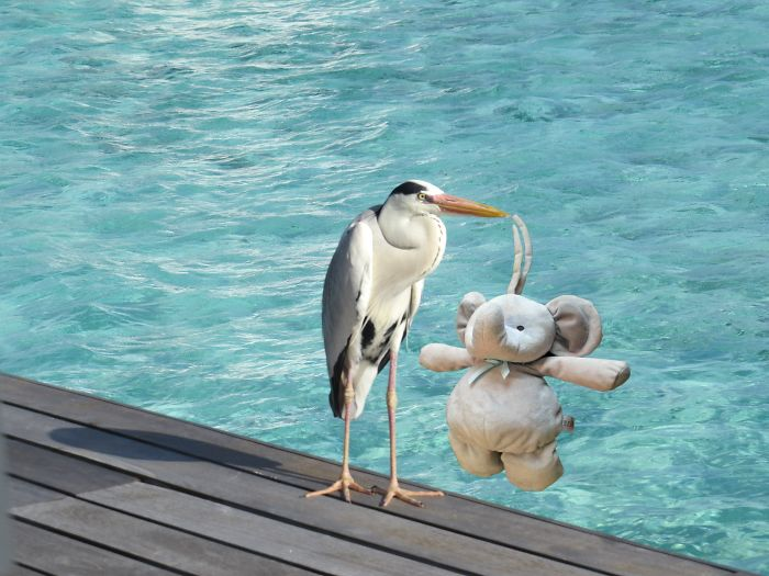 A Happy Holiday With A New Friend In Athuruga, Maldives.