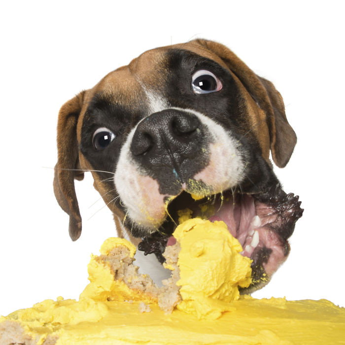 Photographer Captures Dogs Eating Cakes And It's Amusing