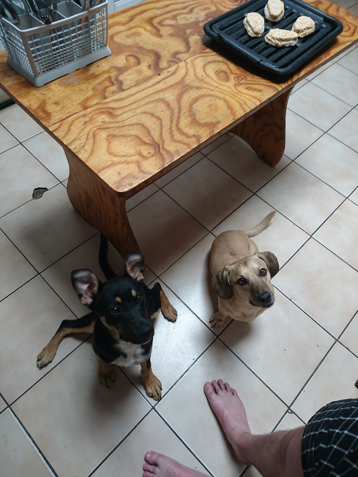 Laila (black Puppy) Was Found On The Streets, The Beige Dog Is Surprise, They Are Inseparable