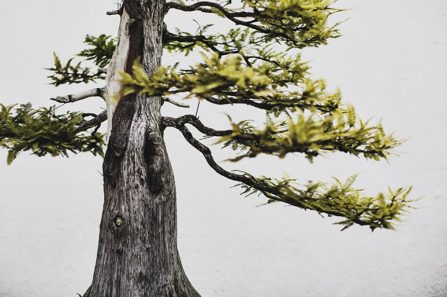 I Spent 2 Years Capturing The Beauty Of Bonsai Trees
