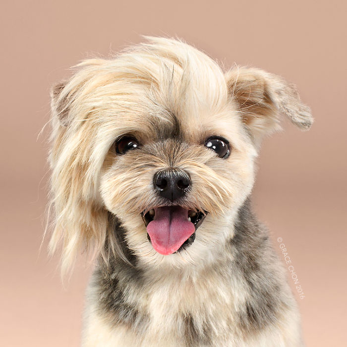 Dogs Before And After Their Haircuts 16 Pics