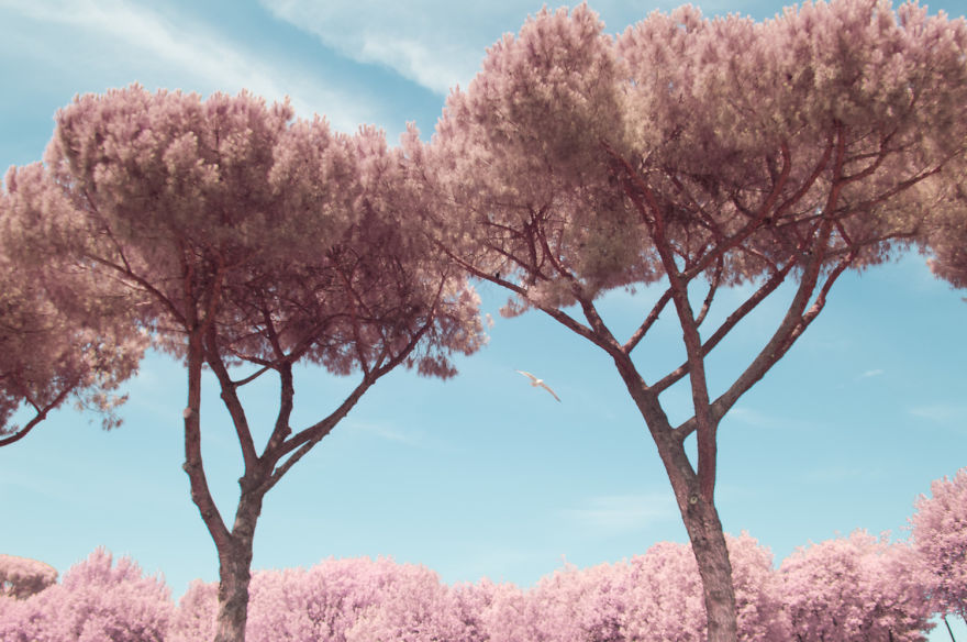 I Photographed Rome In Infrared