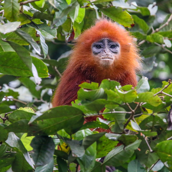 I've Been Exploring Borneo Rainforest And Here Are My Jungle Friends That Need Our Protection